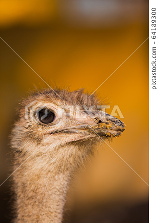 Animal Farm - ostrich, sheep, black goat, cattle and chicken 042 64189300