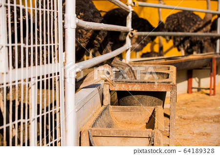 Animal Farm - ostrich, sheep, black goat, cattle and chicken 053 64189328