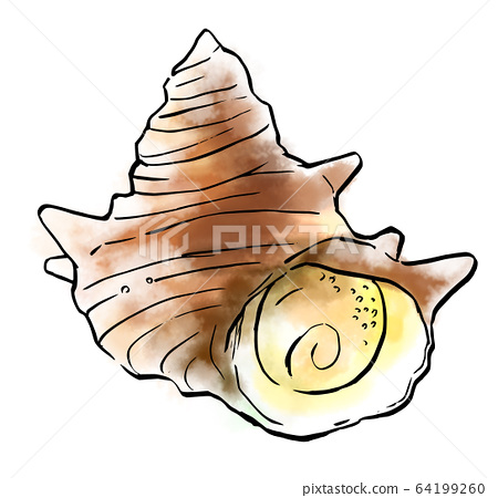 음식 일러스트 해산물 소라 64199260