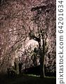 Hitachi Fudoki Hill Weeping Cherry Blossom Light Up 64201634
