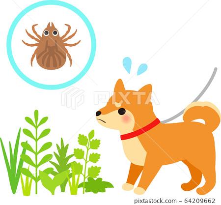 狗在草地上的壁蝨的形像上行走 64209662