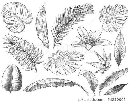 Hand drawn tropical leaves. Sketch tropic plants leafs, hand drawn exotic floral leaf vector illustration set 64210003