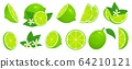 Cartoon lime. Limes slices, green citrus fruit with leaves and lime blossom isolated vector illustration set 64210121