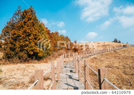 Yeongju Mountain Oreum volcanic cone hiking trail road at autumn in Jeju Island, Korea 64210979