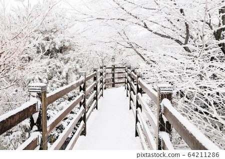 Snowy winter Hallasan mountain 1100 highland in Jeju Island, Korea 64211286