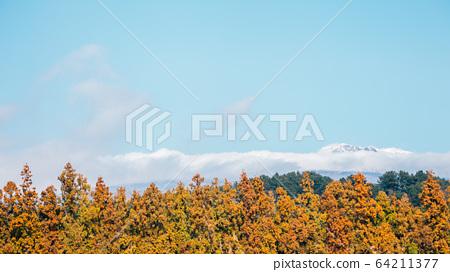Snowy Hallasan mountain and autumn maple tree in Jeju Island, Korea 64211377