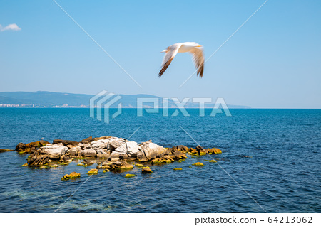 Black sea and seagull in Nessebar, Bulgaria 64213062