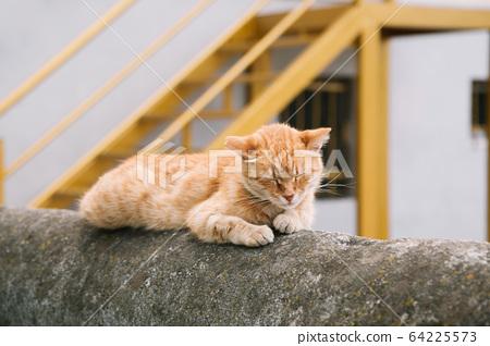 Street cat sleeping on the wall 64225573