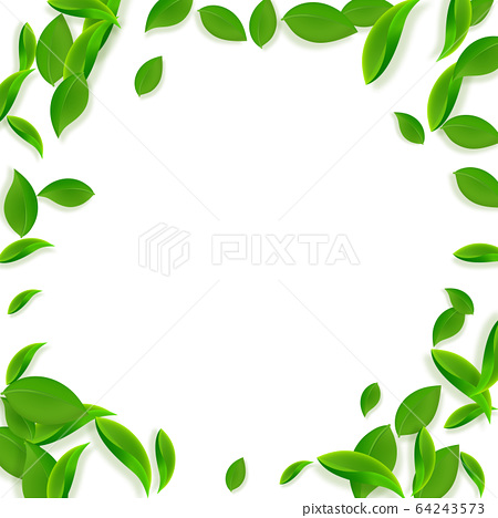 Falling green leaves. Fresh tea chaotic leaves fly 64243573