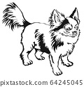 Decorative standing portrait of dog long-haired 64245045