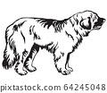Decorative standing portrait of dog Leonberger 64245048