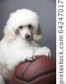 image of dog basketball dark background  64247017