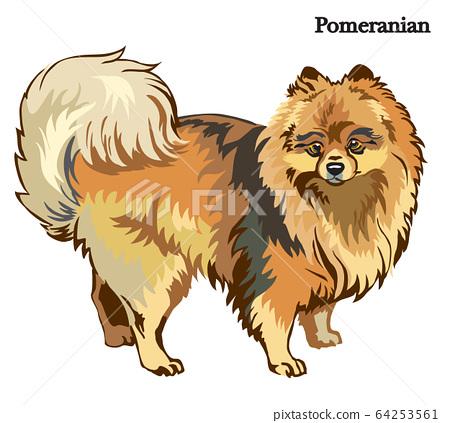 Pomeranian vector illustration 64253561