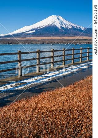 야마나시 _ 후지산과 산책로 (야마나카 코) 64255198