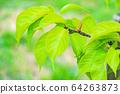 Fresh green 64263873