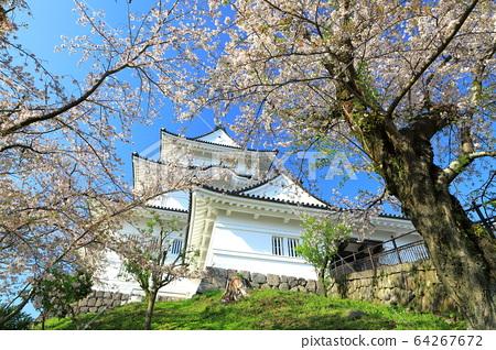 Odawara Castle Sakura Odawara Castle Ruins Park 64267672