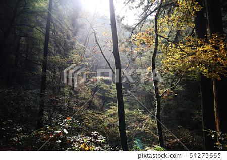 안개의 숲 64273665