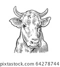 Cows head. Hand drawn in a graphic style. Vintage vector engraving illustration for info graphic, poster, web. Isolated on white background. 64278744