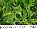 원추리잎에 앉은 배추흰나비 한 마리 64281564