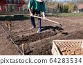 Man planting potatoes in the gardeen 64283534