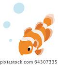 Clown anemonefish 64307335