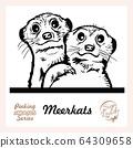 Peeking Friendly Meerkat family - vector illustration isolated on white 64309658