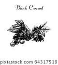 Vector ink hand drawn vintage currant. Vintage 64317519