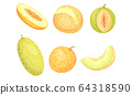 Whole and Cross Section of Melon Fruit with Juicy Flesh and Seeds Inside Vector Set 64318590