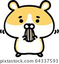 金仓鼠吃葵花籽 64337593