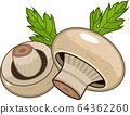 champignon on white background 64362260