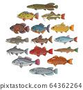 brazilian fish set on white background 64362264