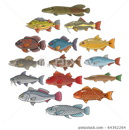 brazilian fish set on white background 64362264