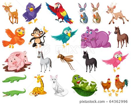 Set of many cute animals on white background 64362996