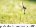 Dragonfly perched on stem in garden 64370405