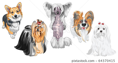 fluffy dogs different breeds 64370415