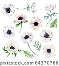 Watercolor collection of white anemones, flowers and leaves 64370766