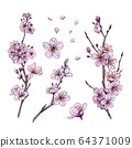 Sakura in bloom, set of three branches and flowers 64371009
