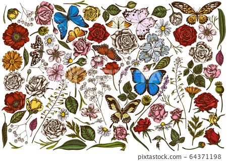 Vector set of hand drawn colored shepherd's purse, heather, iris japonica, sakura, gypsophila, chamomile, almond, poppy flower, calendula, menelaus blue morpho, blue morpho, lemon butterfly, red 64371198