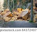 Sandstone rock and landslide collapsed in forest 64372407