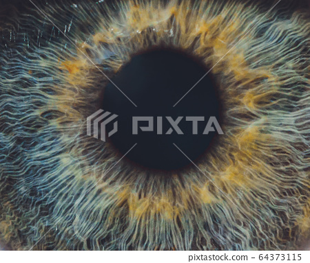 Macro of the eye of a man. Shallow depth of field. 64373115