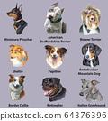 Set of portraits of dog breeds-2 64376396