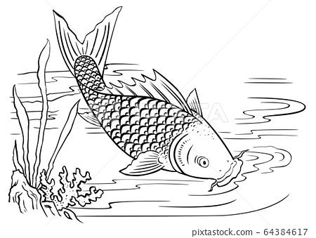 鯉魚戲水 64384617
