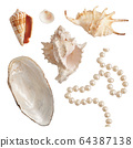 Set of sea shells and pearls, isolated photo 64387138