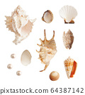 Set of sea shells and pearls, isolated photo 64387142