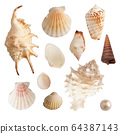 Set of sea shells and pearls, isolated photo 64387143