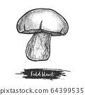 Hand drawn of wood or field blewit. Mushroom 64399535