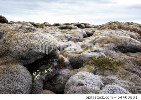 Lava field covered with green moss 64400801
