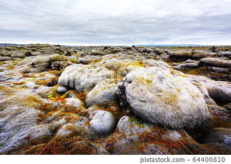 Lava field covered with green moss 64400810