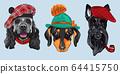 vector Set 2 cartoon hipster dogs 64415750