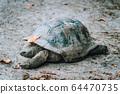 Aldabra Giant Turtle in local park on La Digue Island, Seychelles 64470735